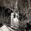 La composizione fotografica: forma e trama
