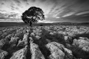 """Malham Single Tree"" (courtesy of www.davidclapp.co.uk/)"