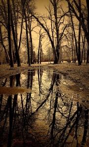 Lo specchio d'acqua nelle foto boschive è sempre un particolare imprescindibile... (foto: A. Clapis)