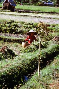 Foto n.5: Indonesia, 2002 (A. Lo Torto)