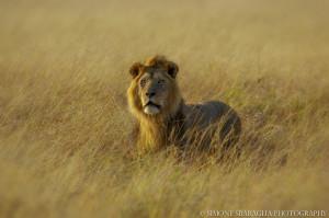 Kenya (ph. Sbaraglia)