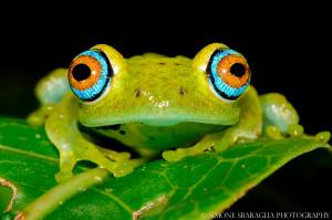 Madagascar (ph. Sbaraglia)