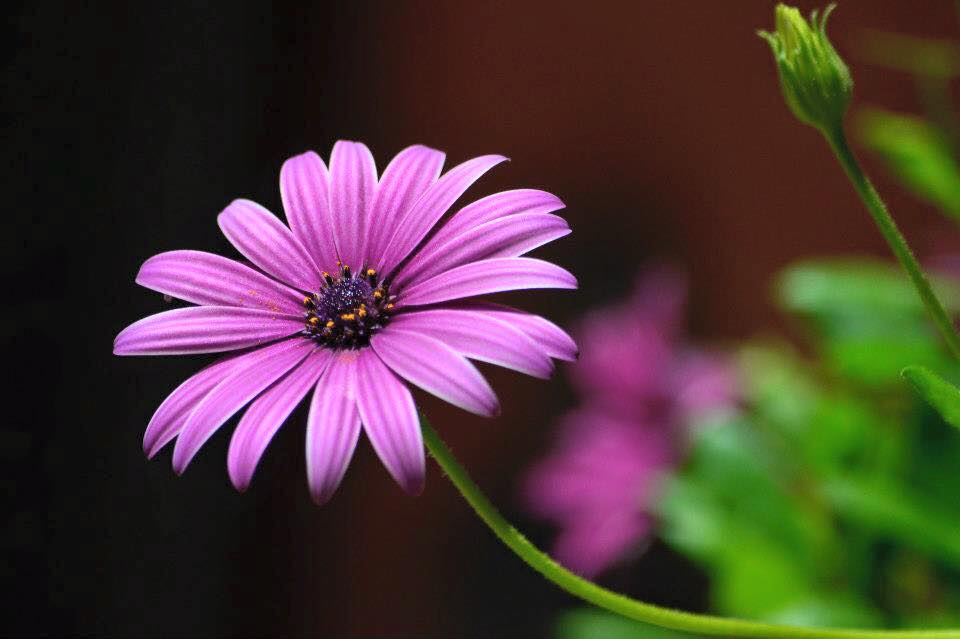 3 semplici suggerimenti per fotografare i fiori club